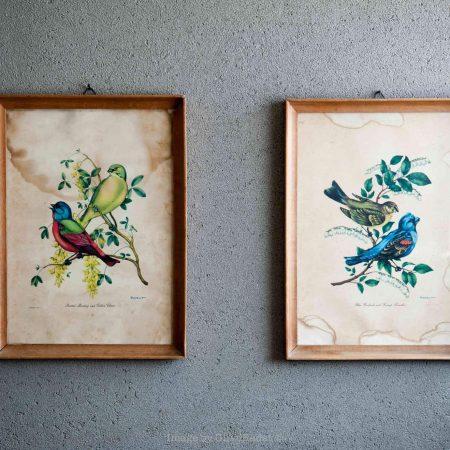 שתי תמונות וינטג' עם ציפורים צבעוניות על רקע קיר עם טיח מינרלי בגוון אפור בטון